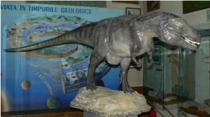 Muzeul de Istorie Naturala Iasi