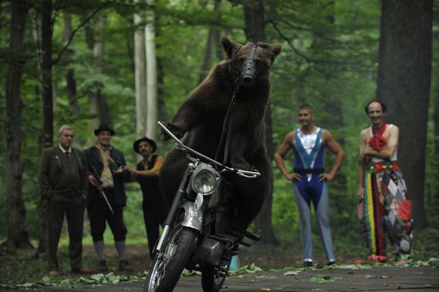 Ursul de Dan Chisu