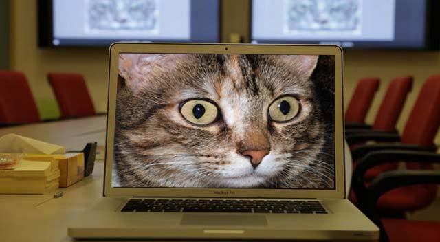 google cauta pisici 1