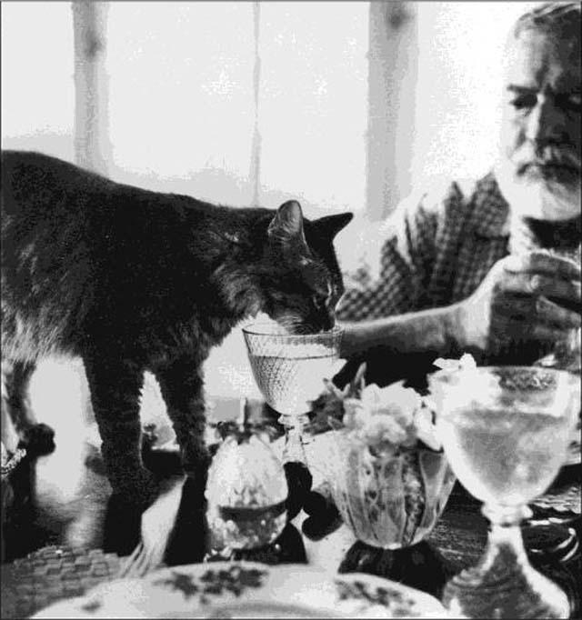 Cristobal - pisica-Hemingway