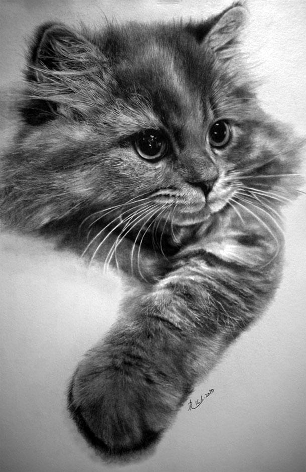 Paul Lung- desene pisici (1)
