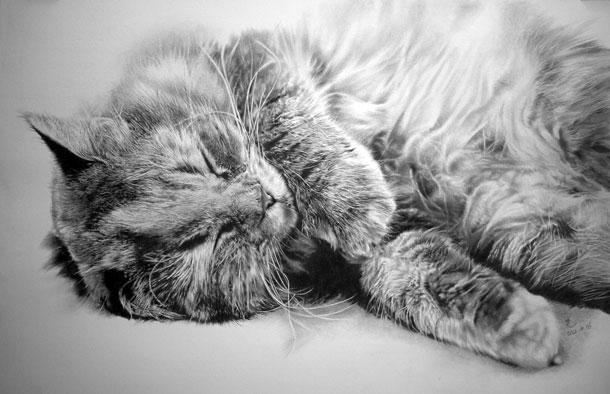 Paul Lung- desene pisici (2)