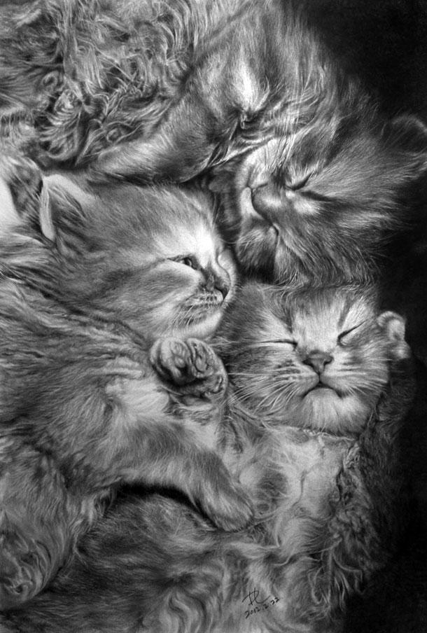 Paul Lung- desene pisici (3)