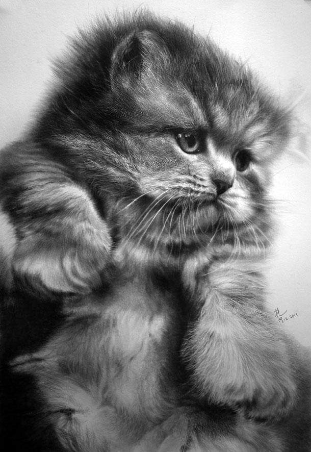 Paul Lung- desene pisici (4)