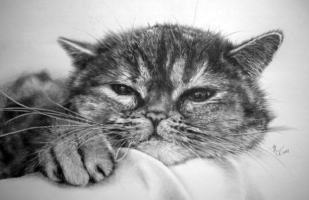 Paul Lung- desene pisici (5)