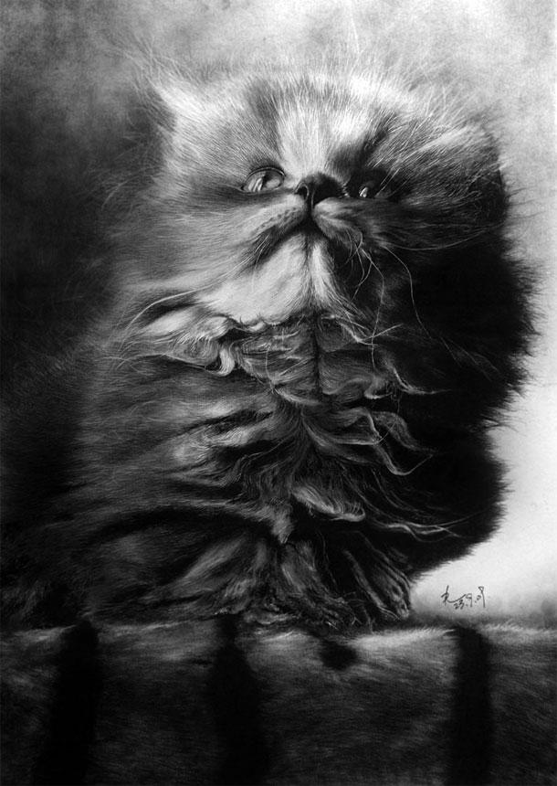 Paul Lung- desene pisici (6)