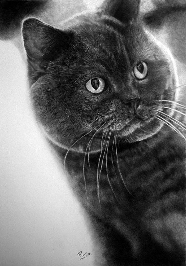 Paul Lung- desene pisici (7)