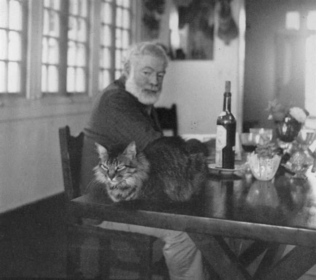 pisica lui Hemingway