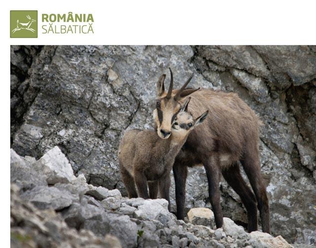 Expozitia ''Romania salbatica''