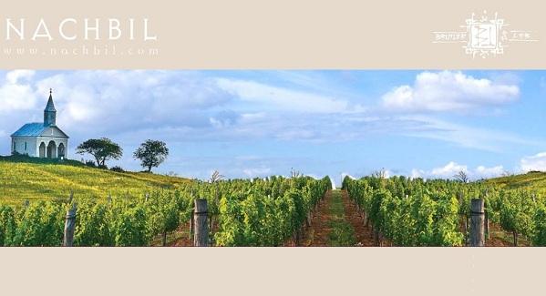 Degustare vinurilor Nachbil(Brutler & Lieb)/ 1 noiembrie iasi goodpoint