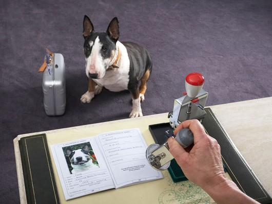 Ce trebuie să faci pentru a obține un pașaport pentru animalul tău de companie/ foto caine