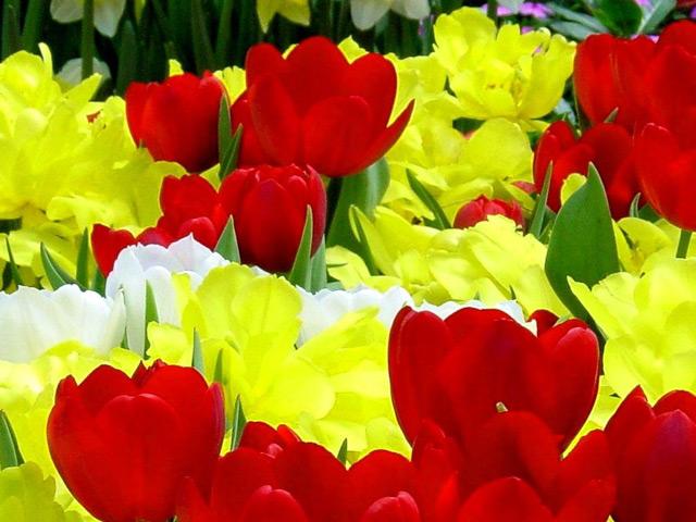 flori-8-martie