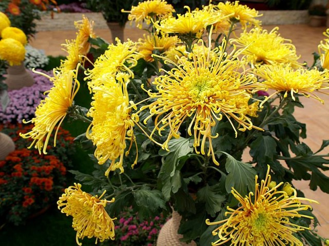 flori de toamna 10